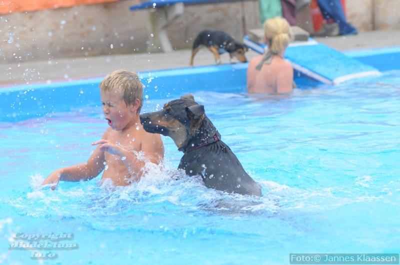 Honden zwemmen 2015 - Fotos van het zwembad ...